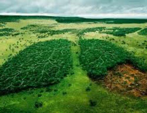 Los factores ecológicos en las epidemias